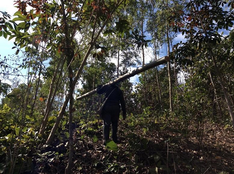 山から木を切りだす